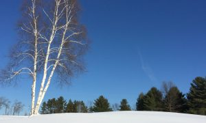 Birch tree on a hill of snow against a deep blue Michigan winter sky.