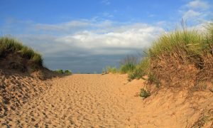 Sand Dunes Along Lake Michigan, USA