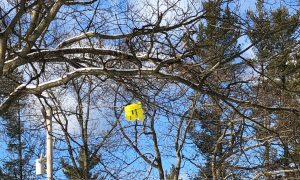 Plastic bag caught up in a tree
